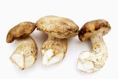 Three whole ceps Stock Photos