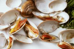 Opened clams Stock Photos