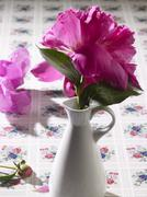 A peony in a vase Stock Photos