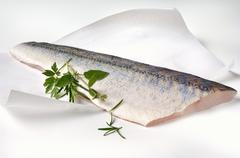 A fresh zander fillet on greaseproof paper Stock Photos