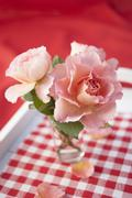 'Augusta Louise' roses in a glass Stock Photos
