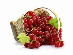 Redcurrants with leaves in a basket Stock Photos