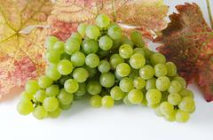 Green grapes, variety Silvaner, with leaves Stock Photos