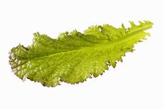 A red mustard leaf Stock Photos