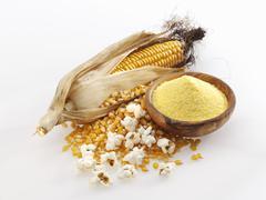 Corncob, corn kernels, cornmeal and popcorn Stock Photos