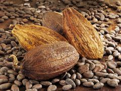 Cocoa fruits and cocoa beans Stock Photos