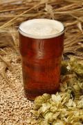 A glass of ale with malted barley and hops Stock Photos