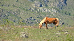 Horse in Altai mountains Stock Footage