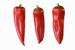 Three red pointed peppers Stock Photos