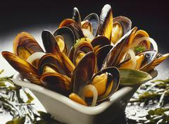 Mussels in stock Stock Photos