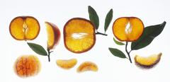 Mandarin oranges: slices, wedges and pieces Stock Photos