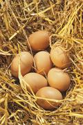 Seven brown eggs in straw Stock Photos