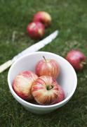 Red Gala apples in a bowl in a field Stock Photos