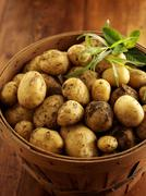 New potatoes and herbs in a wooden basket Stock Photos