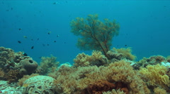 Coral reef with a sea fan and plenty fish 4k Stock Footage