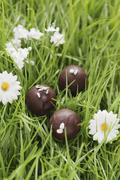 Chocolates with candied rosemary in artificial grass Stock Photos