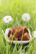 Chocolate truffles in artificial grass Stock Photos