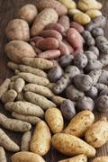 Assorted types of potatoes on a wooden surface Stock Photos