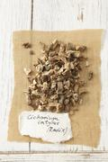Dried chicory root (Cichorium intybus) Stock Photos