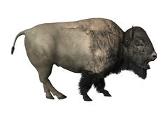 3D Rendering Bison on White Piirros
