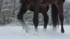 SLOW MOTION: Dark bay horse walking on deep snow blanket in white winter Stock Footage