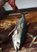 Yellowfin tuna being butchered Stock Photos