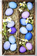 Blue and purple Easter eggs with spring flowers in a wooden box lined with hay Stock Photos