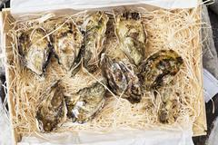 Fresh oysters in a transportation box Kuvituskuvat