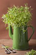 Thyme leaves in an old teapot Stock Photos