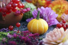 And ornamental squash between dahlias and berries Stock Photos