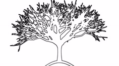 Black and White Tree Drawing Animation Stock Footage