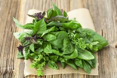 A bunch of fresh, organic basil Stock Photos