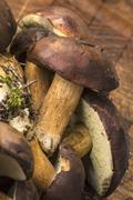 Fresh bay boletes on a wooden board Stock Photos