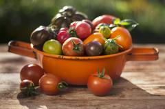 Various types of tomatoes in an orange, enamel sieve on a wooden surface Stock Photos