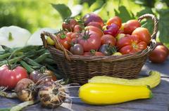 A high summer vegetable harvest in a garden Stock Photos