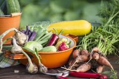 Early summer vegetable harvest in a garden Stock Photos