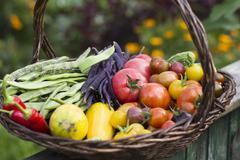A large harvesting basket in a vegetable garden Kuvituskuvat