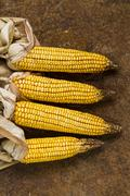 Four corn cobs on a rusty metal surface Stock Photos
