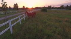 AERIAL: Dark brown horses running and playing in tall grass on horse ranch Stock Footage