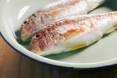 Fresh red mullet on an enamel plate Stock Photos