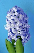 Painting - bluebell Stock Photos