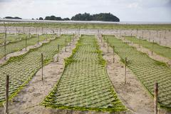 An algae garden on the island of Okinawa, Japan Stock Photos
