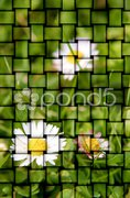 Modified picture of meadow flowers Stock Photos