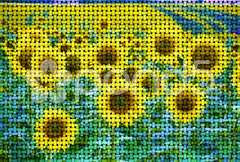 Modified picture of sunflowers Stock Photos