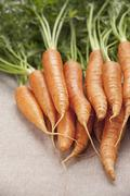 Fresh carrots on a light tablecloth Stock Photos