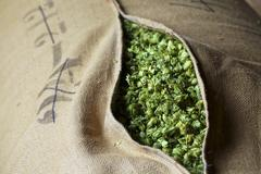 Beer hops in a jute sack Stock Photos