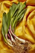 Fresh wild leek on a yellow cloth Stock Photos
