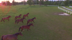 AERIAL: Numerous herd of horses running freely in meadow field on horse ranch Stock Footage