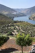 A wine-growing region in Douro (Portugal) Stock Photos