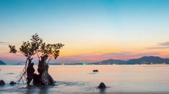 Sunset phuket island beach bay mangrove tree panorama 4k time lapse thailand Stock Footage